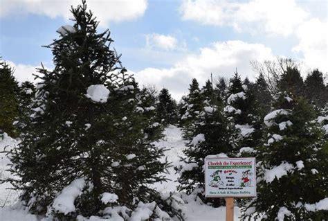 national christmas tree association s location may
