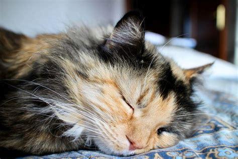 wie lange schlafen katzen wie viel arbeit macht eine katze schlafen katzen den