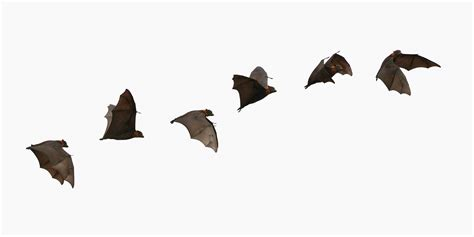 bats flying bat removal amp prevention inc