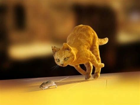 cat chases the gallery for gt cat chasing mouse