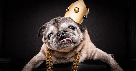 pug g the pug notorious pug