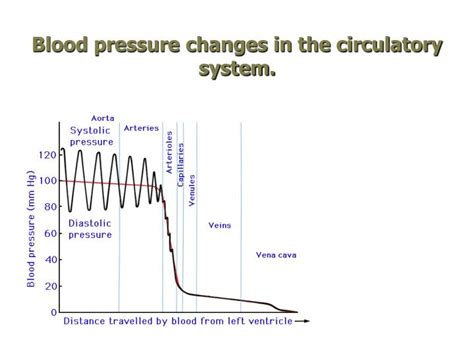 blood pressure swings ppt open circulation powerpoint presentation id 2687137