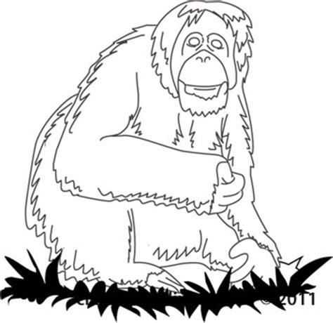 Outline Drawing Orangutan by Pics For Gt Forest Animals Clip Black And White