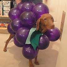 grapes for dogs make your into a bunch of grapes for 9 steps with pictures
