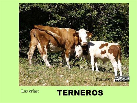 imagenes animales dela granja animales de granja