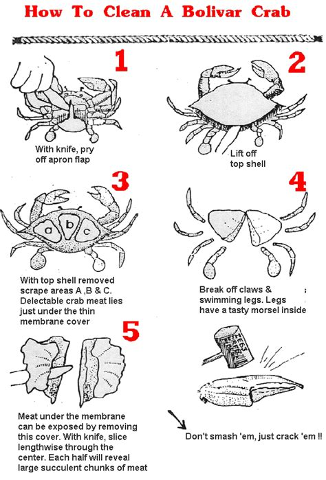 How To Sanitize A by How To Clean A Crab