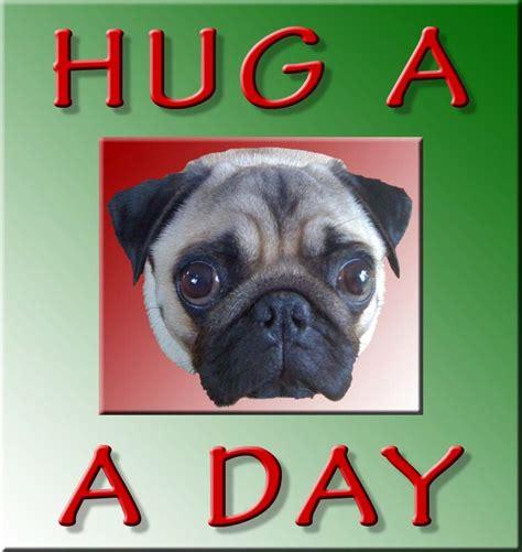 hug a pug day hug a pug a day