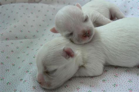 imagenes animales recien nacidos imagenes de gatitos con frases part 36