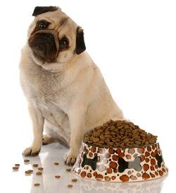 best puppy kibble the best food for your healthy feeding for dogs