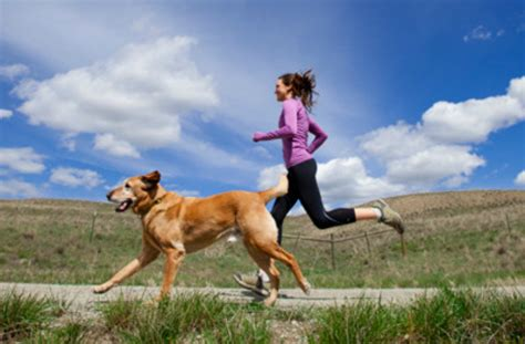 Your Dogs Nationality by 10 Important Things To Before You Go Running With