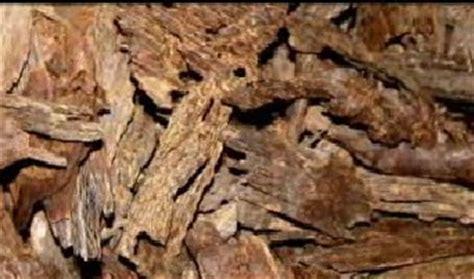 Serbuk Kayu Gaharu herba tumbuhan gaharu untuk rohani dan jasmani