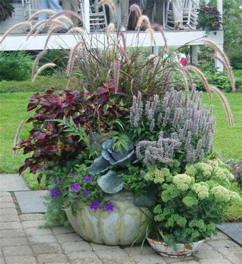 Planter Ideas Sun by 362 Best Images About Outdoor Potted Plants On