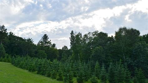 mayflower venues oak hill christmas tree farm