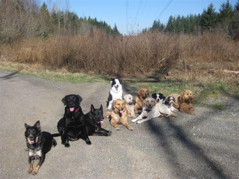 lots of dogs pam s cwalu testimonial joan ranquet animal communicator