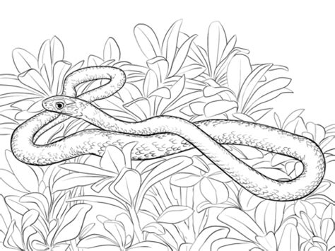 bronze snake coloring page snake coloring page coloring page