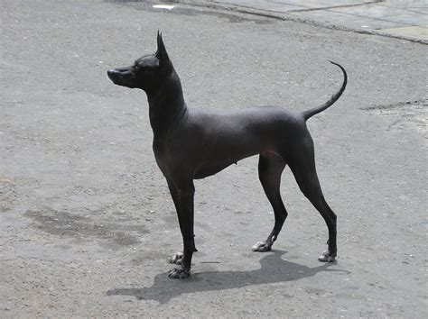 hairless dogs mi weekly selection 31 humanities social sciences mapping ignorance