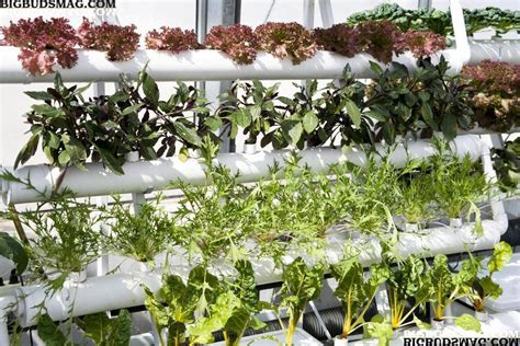 gardening hydroponics ã learn the amazing of growing fruits books nutrient technique ph ppm ec grow med uni