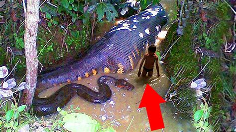 jungle animals the most dangerous animals in the rainforest