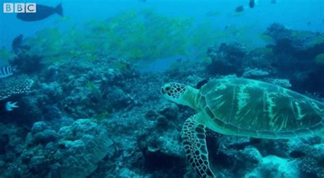 ocean life animated gif ocean life gifs find share on giphy