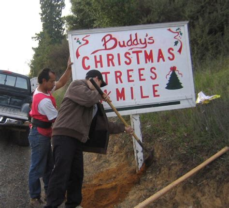 5 bay area farms to cut your own christmas tree 171 cbs san