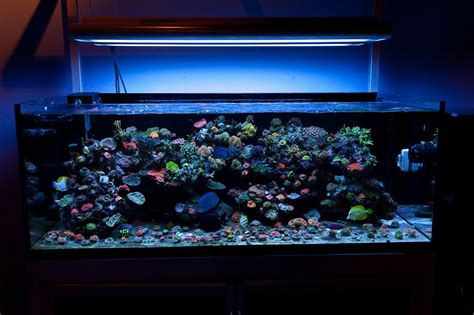 Led Aquarium marine fish tank maintenance led lighting 2017 fish tank