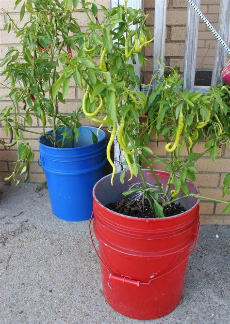 Growing Edibles in Containers   Natural Learning Initiative