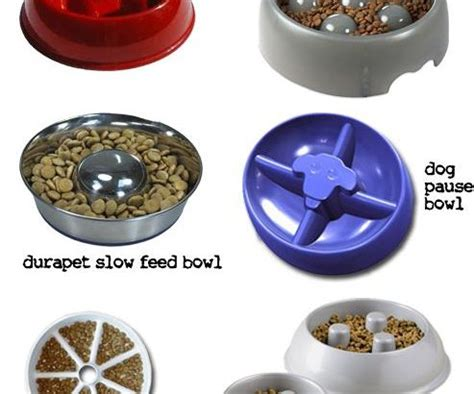 bowls for fast eaters 4 best bowls for fast eaters completed with the reviews petsepark