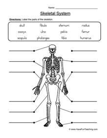 skeletal system worksheet 2