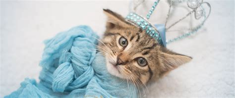 gets kitten stray kitten gets princess treatment in magical newborn photo shoot abc news