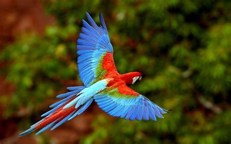 wallpaper full hd parrot parrot full hd wallpapers parrot wallpapers parrot hd