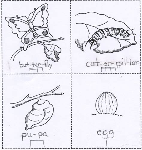 coloring pages butterfly life cycle butterfly life cycle coloring page az coloring pages