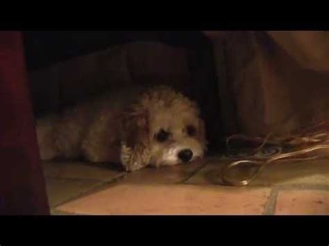 sad commercial sad ad for stray dogs during the holidays funnydog tv