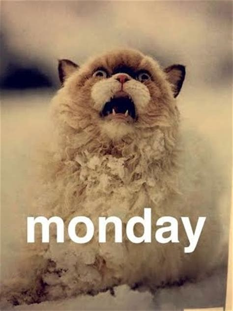 7 Ways To Survive A Monday 2 by 7 Ways To Get Happier Now Meme Mondays And Memes