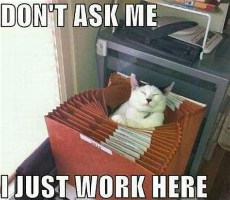 Working Cat Meme - funny animal pictures with captions animals pinterest
