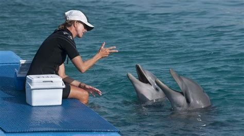 dolphin talk how we can talk with dolphins in 5 easy steps age books how do dolphins talk reference