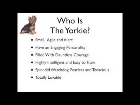 names for a yorkie how to choose a yorkie name