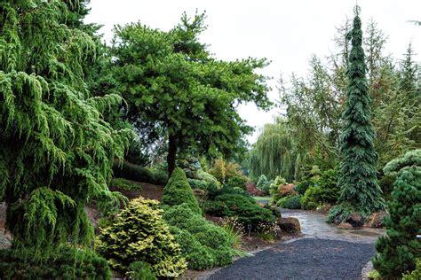 abeti da giardino alberi a crescita rapida alberi scopriamo gli alberi a