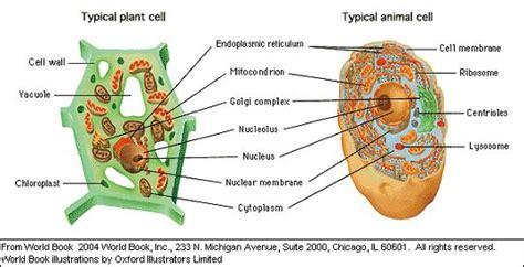 Biologi Modern Biologi Sel Wildan Yatim biologi edukasi