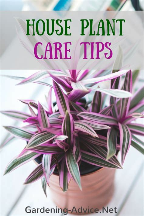 desk plant maintenance helpful tips to care for plants indoor house plant care how to care for common and