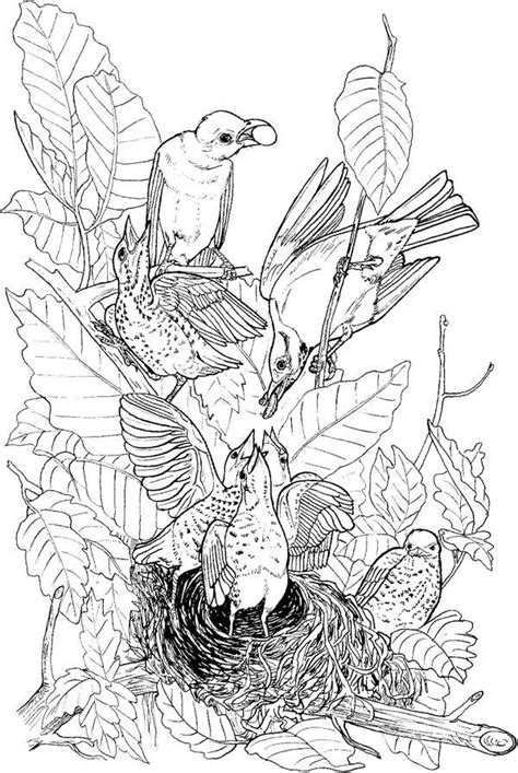 coloring sheet bird s nest nest coloring page coloring home