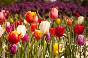Flower In Bloom fab2can portfolio spring flowers in bloom