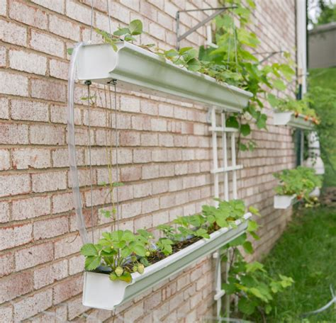 Gutter Strawberry Planter by How To Make Gutter Planters For Strawberries Primal