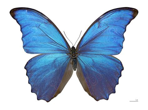 and butterfly damien hirst s butterflies distressing but weirdly uplifting environment the guardian