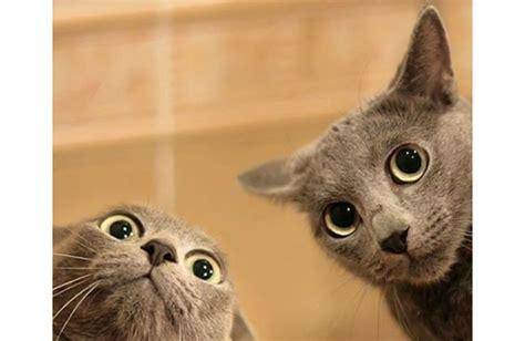 Surprised Cat Meme - site unavailable