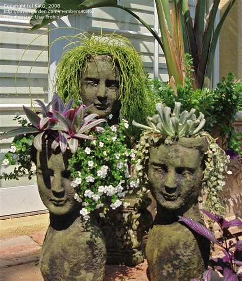 face planters specialty gardening what is your most unusual container