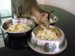 diy healthy cat food recipes going evergreen