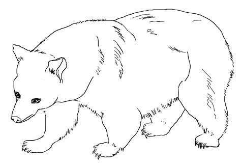 Untuk Anak Anak gambar mewarnai beruang untuk anak paud dan tk