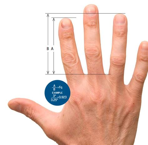 to finger finger length predicts health and behavior the ill community