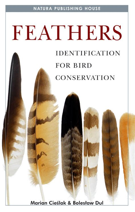 feathers identification for bird conservation