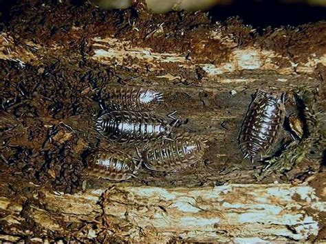 how to get rid of woodlice in my bathroom weird tiny centipede bugs in bedroom yahoo answers